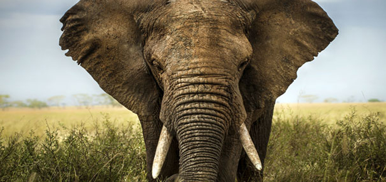 Seeing elephants in the wild is a experience all it's own