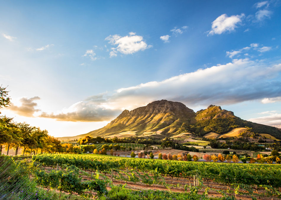 Enjoy one of the many African vineyards