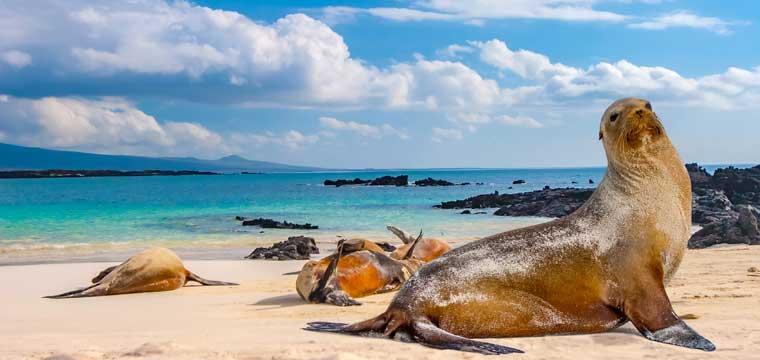 Ecuador, The Galapagos Islands