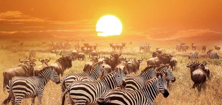 Serengeti National Park. Africa. Tanzania