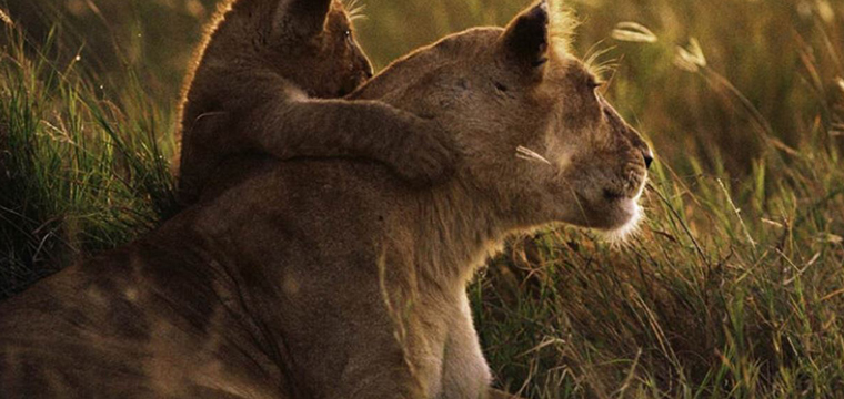If you have a love for Wildlife an African Safari is the key to your heart