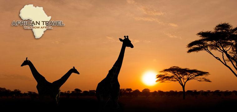 Watch giraffes frolic on a sunset safari
