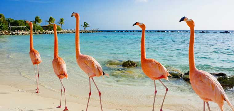 Aruba Island, Caribbean