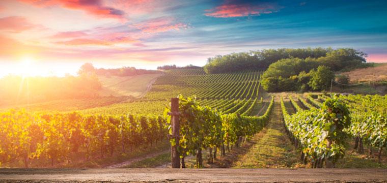 Beautiful Tuscany Wine Vineyards