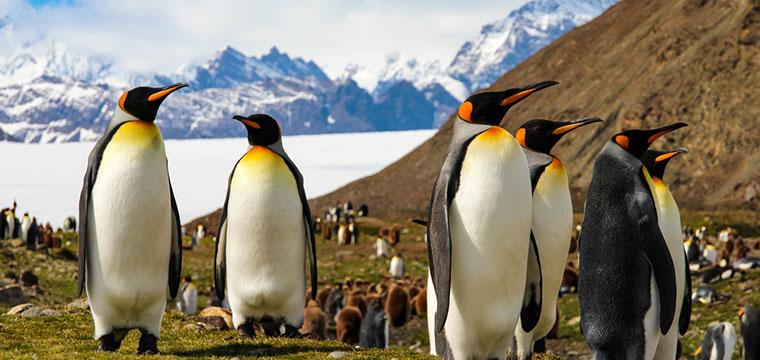 Monograms is NEW to Antarctica