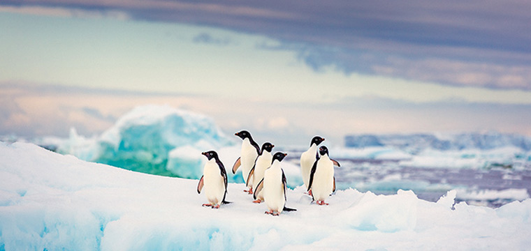 Meet penguins, seals and and whales