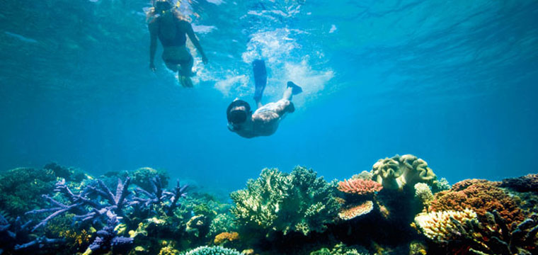 Scuba Diving and snorkeling at the Great Barrier Reef