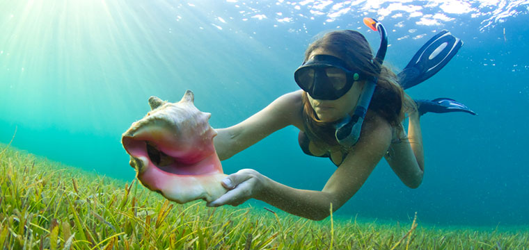 Snorkeling in The Caribbean and finding a Conch shell