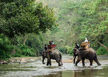 Eco Tourism with Elephant