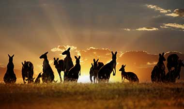 The Ultimate Guide to Australia