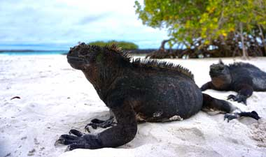 Explore the Galápagos Islands